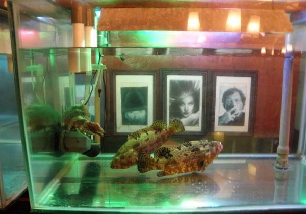 Something Fishy Going On at Café Batavia …