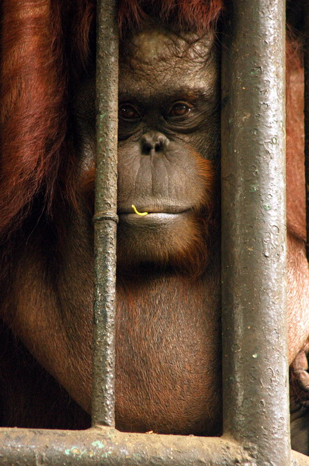 Manila-Zoo_111_resize