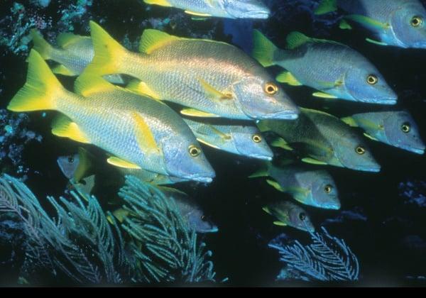 Fish and the 'Brain Food' Farce