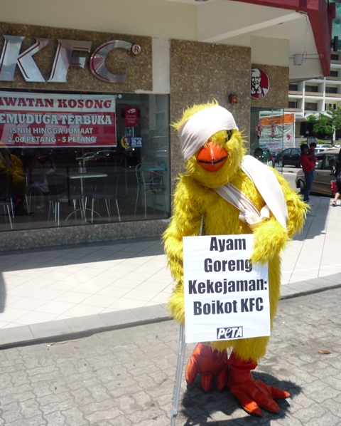 PETA Chicken Protests KFC, Kota Kinabalu
