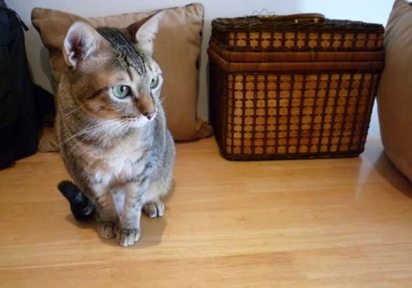 Top 10 Tuesday: Purrr-fect Cat-Care Tips!