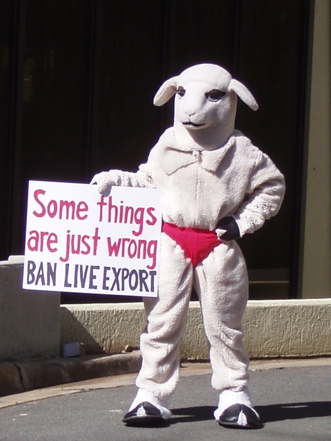 "PETA's ""sheep"" dog Abbott and Gillard"
