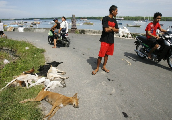 Balinese Government Killing Dogs With Strychnine