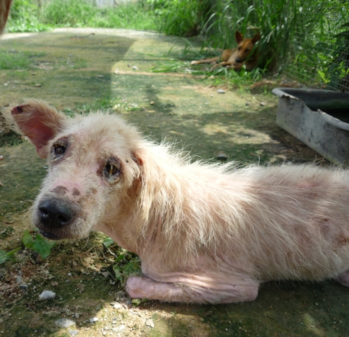 Thai Animal Welfare Law is Dying