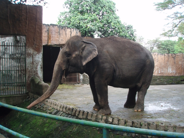 The Manila Zoo's Lone Elephant Mali