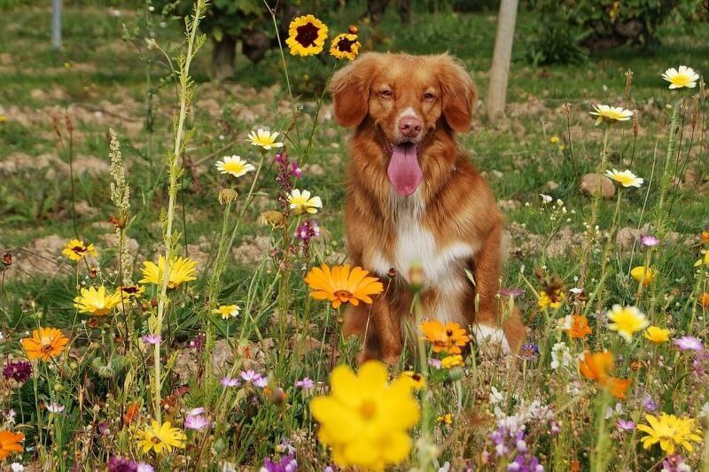 dog-702976_1280