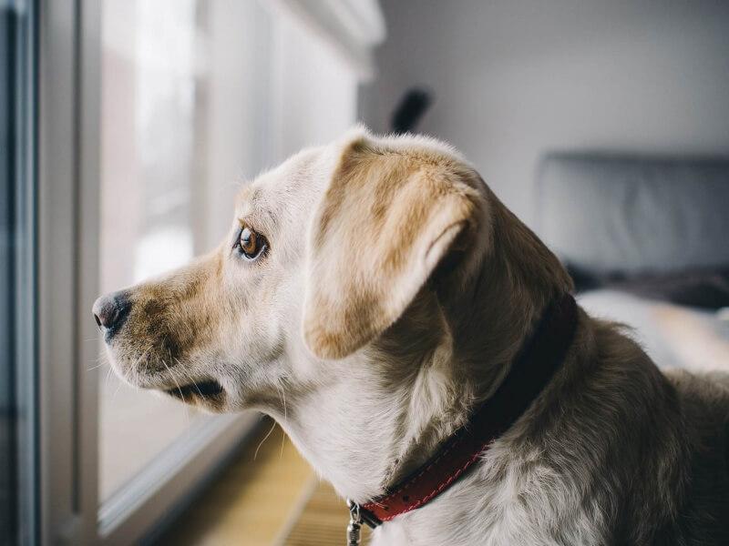 dog-926220_1920