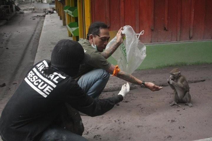 Mount Merapi Animal Rescue, JAAN