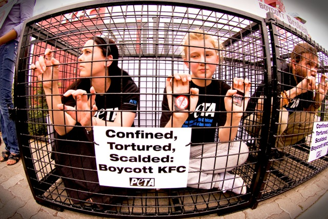 South African Activists: When It Comes to Cruelty, Nobody Does Chicken Like KFC!