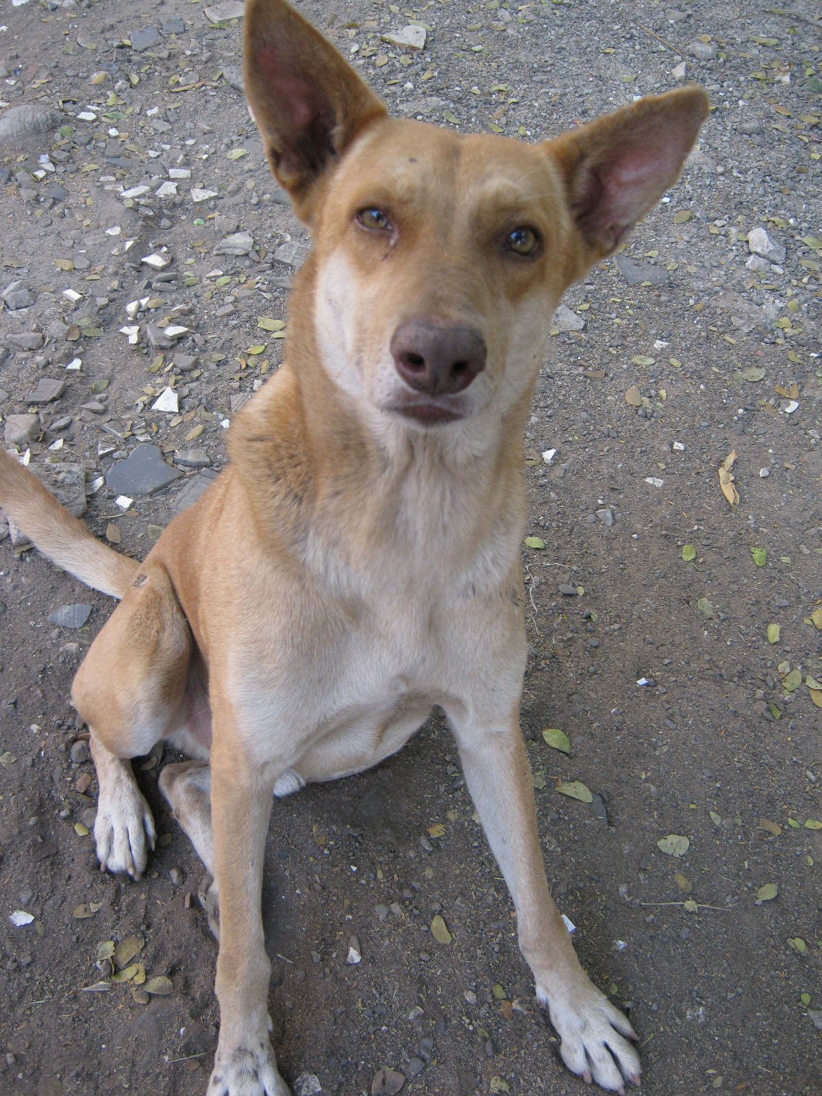 Bali Stops Culling Stray Dogs