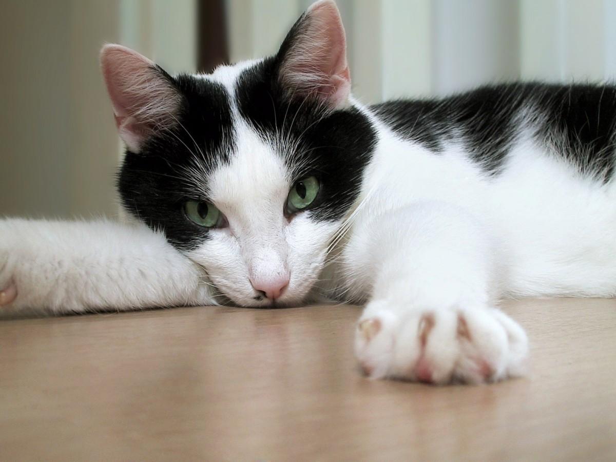 New Documentary Reveals the Plight of Azerbaijan's Street Cats