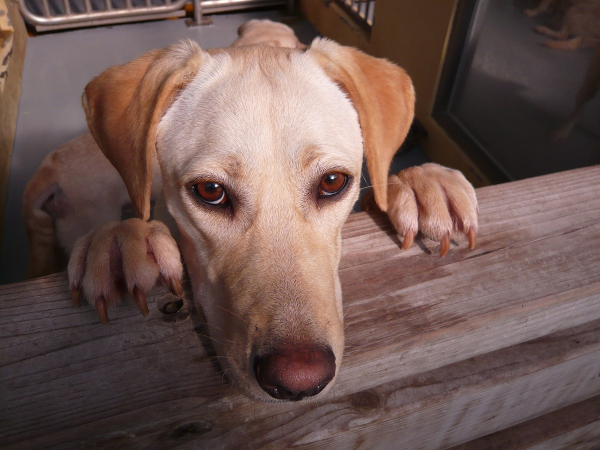 Five Simple Ways to Help Animals on Facebook