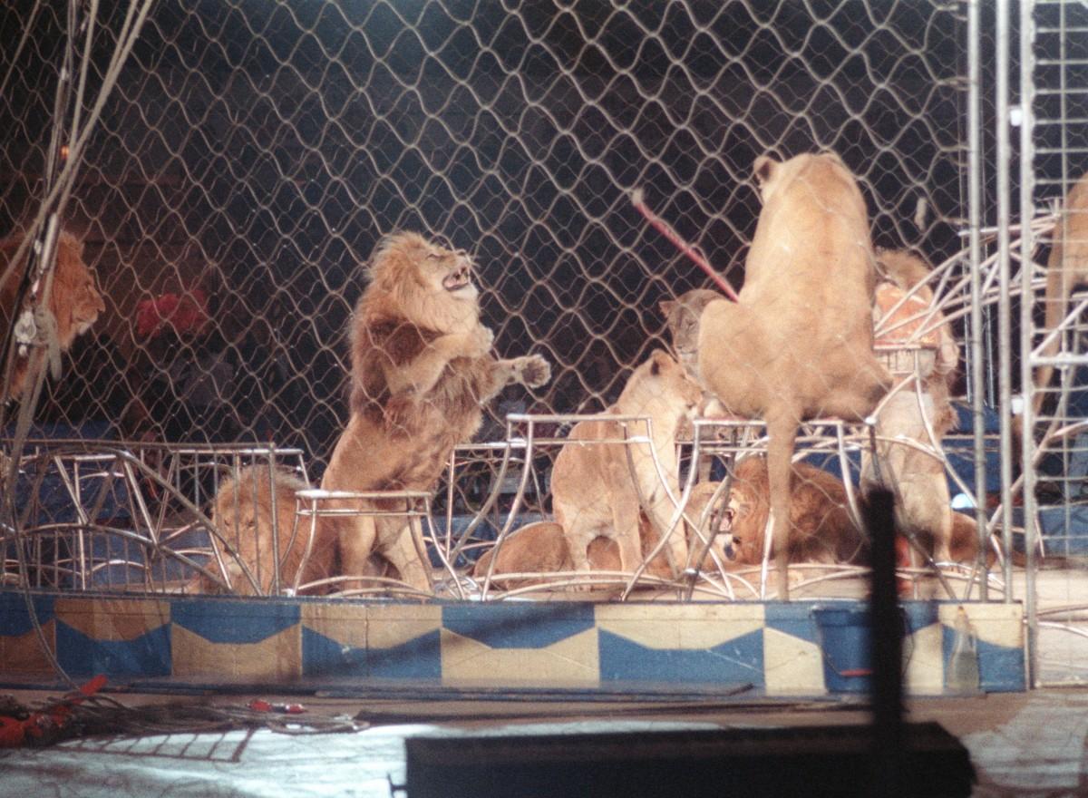 Lion act