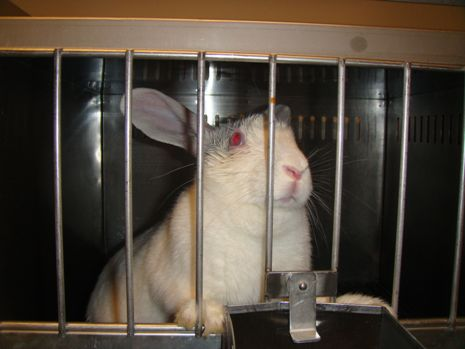 Lipton Stops Cruel Animal Tests