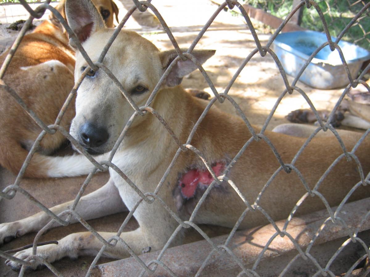 Dog at Tony's Shelter