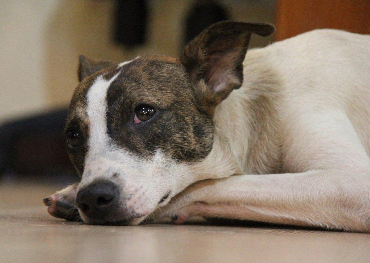 Malaysia dog abuse
