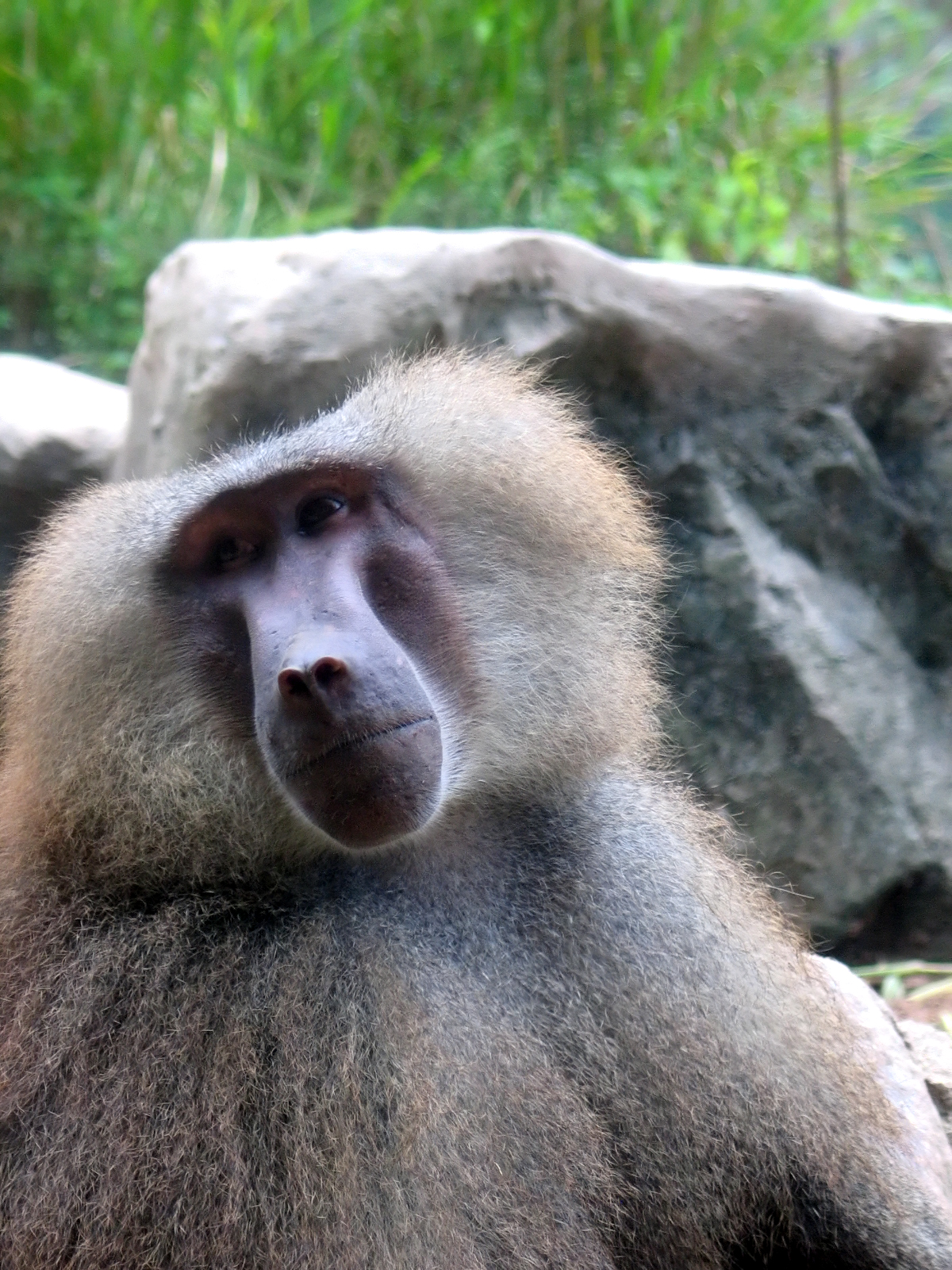 Victory for Baboons at NMMU