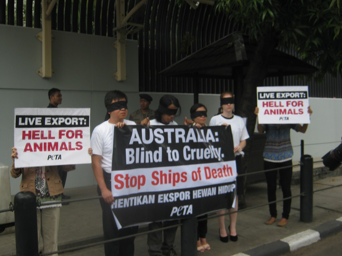 Live Export Indonesia Protest
