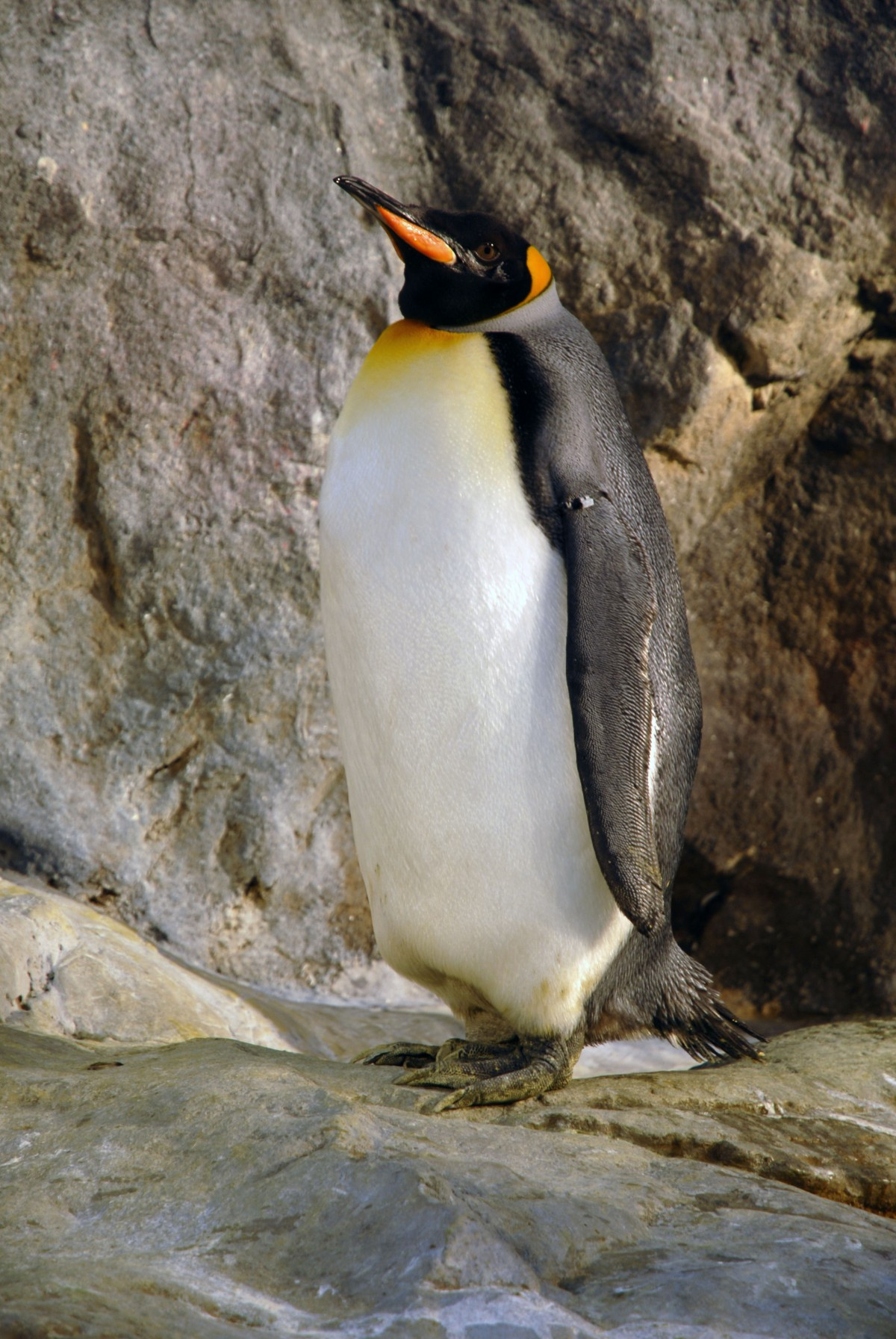 Penguin Tuxedo