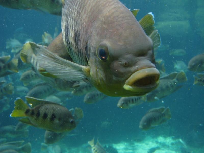 fishswim