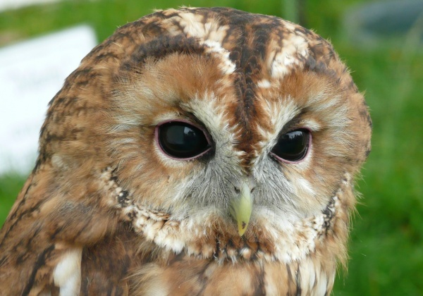 Five Fun Facts About Owls