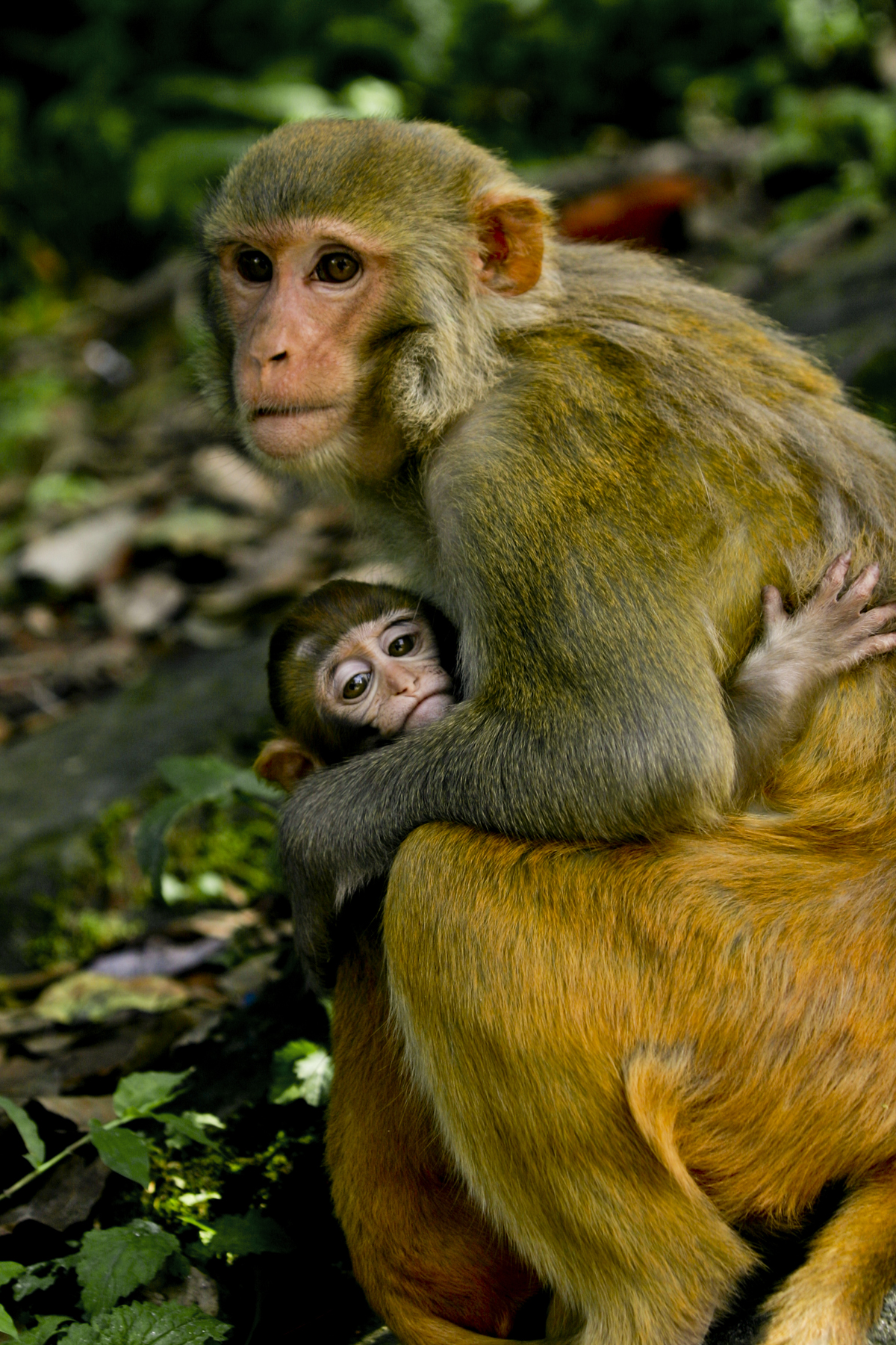 Monkey Mother