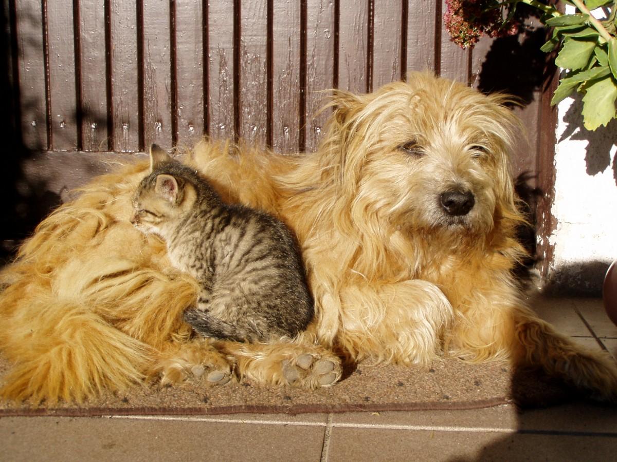 Cat Dog Hoard