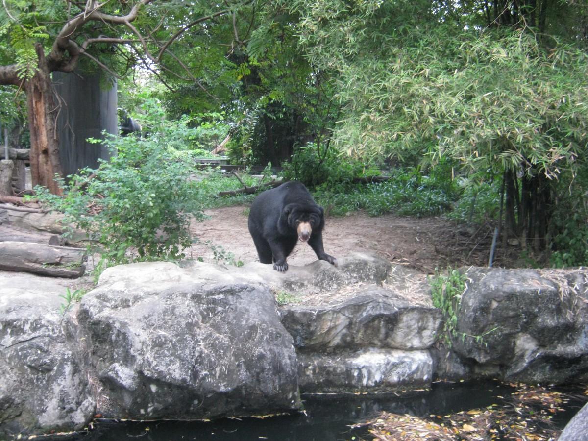 Bear at Dusit