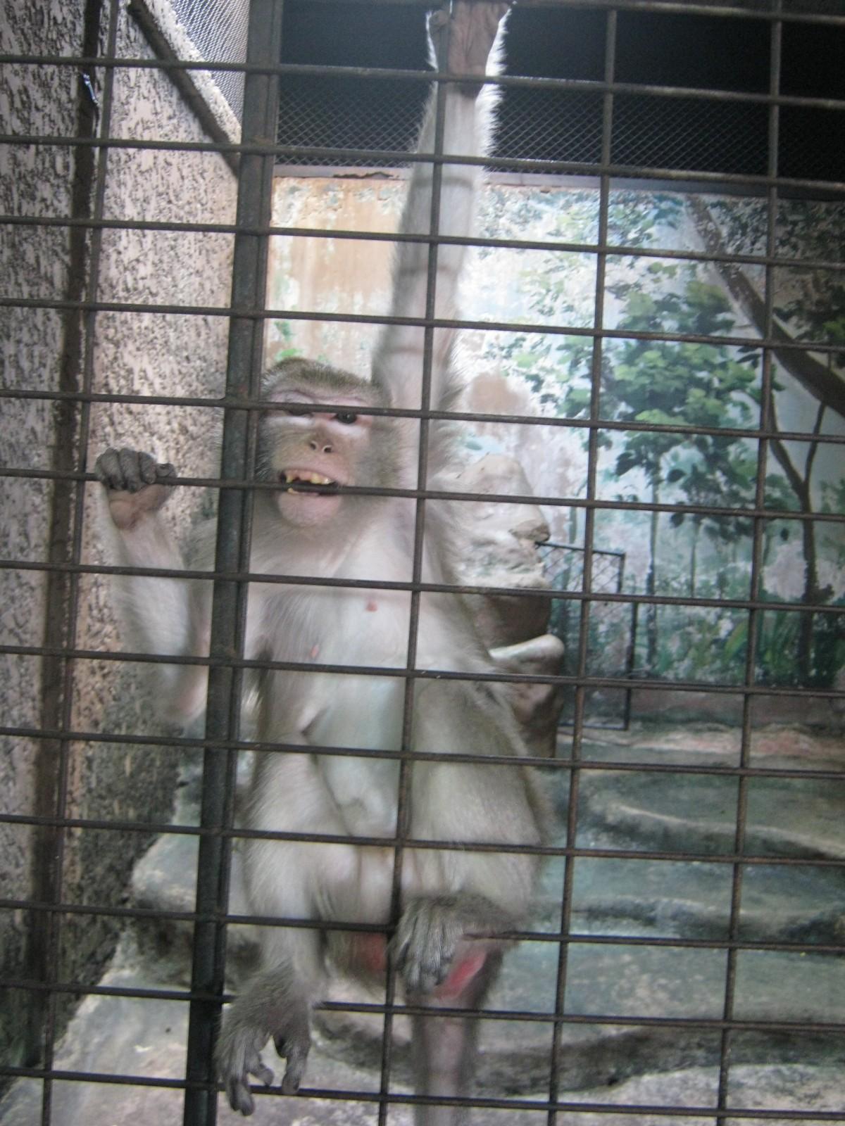 Zoochosis monkey