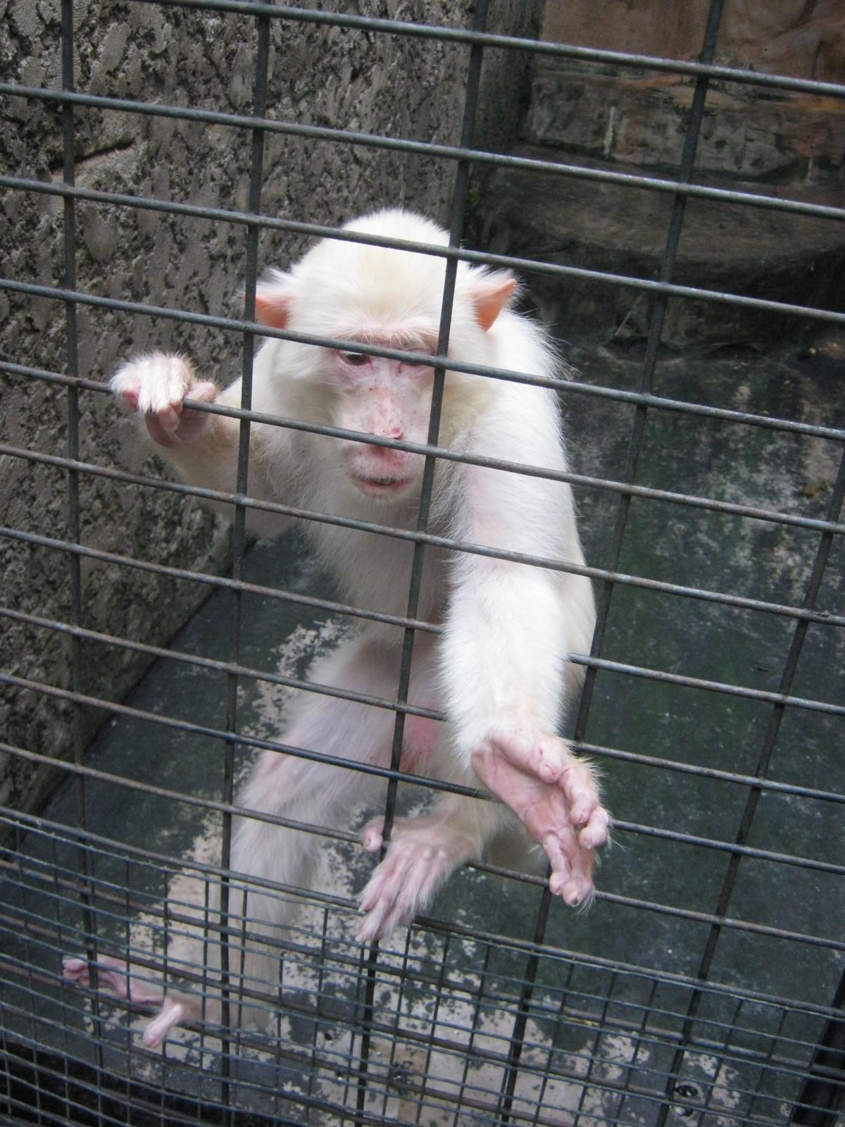 Monkey Reaching Cage