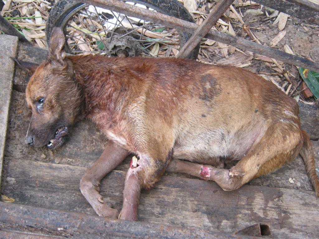 Dying dog