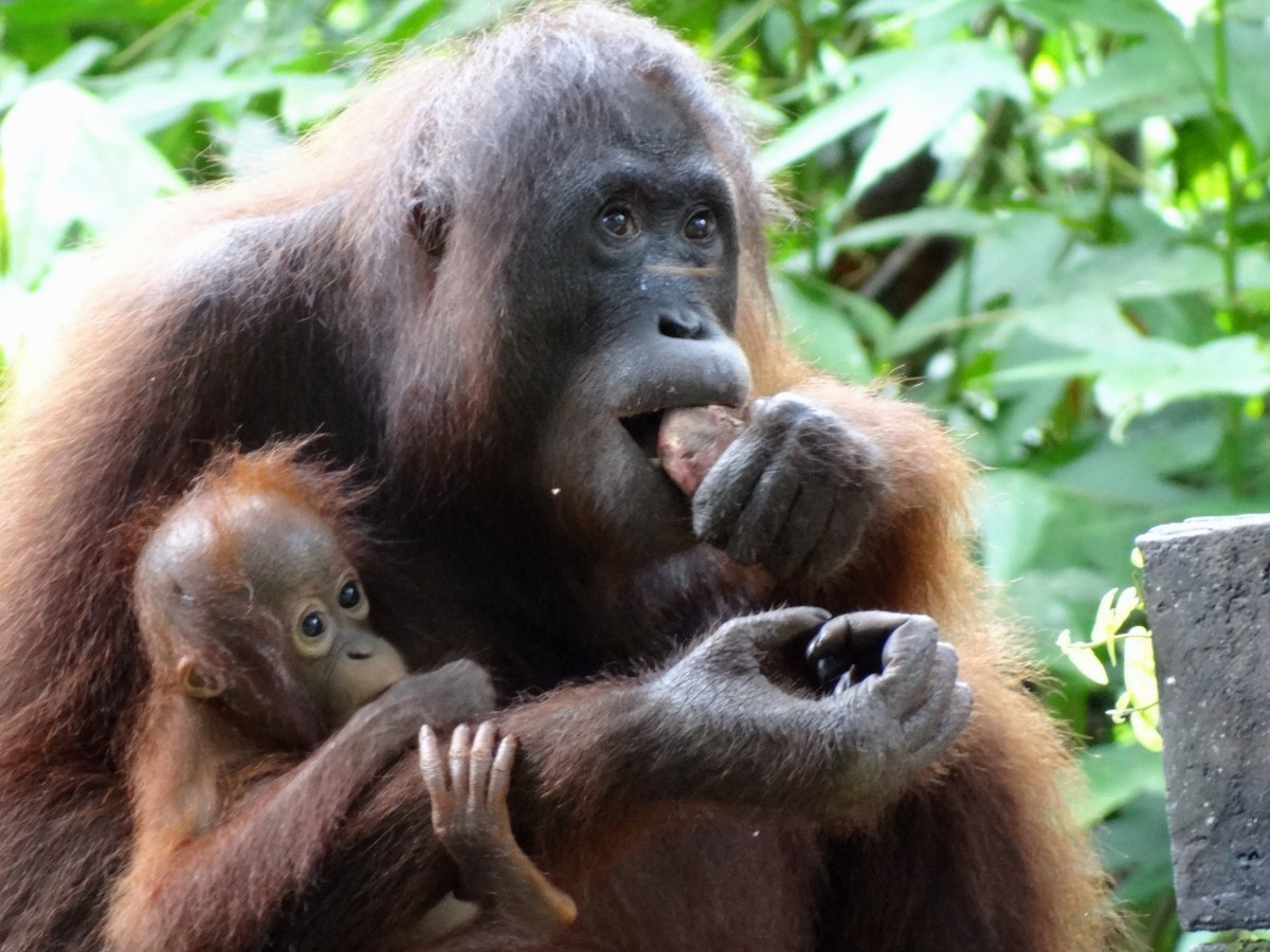 orang with baby