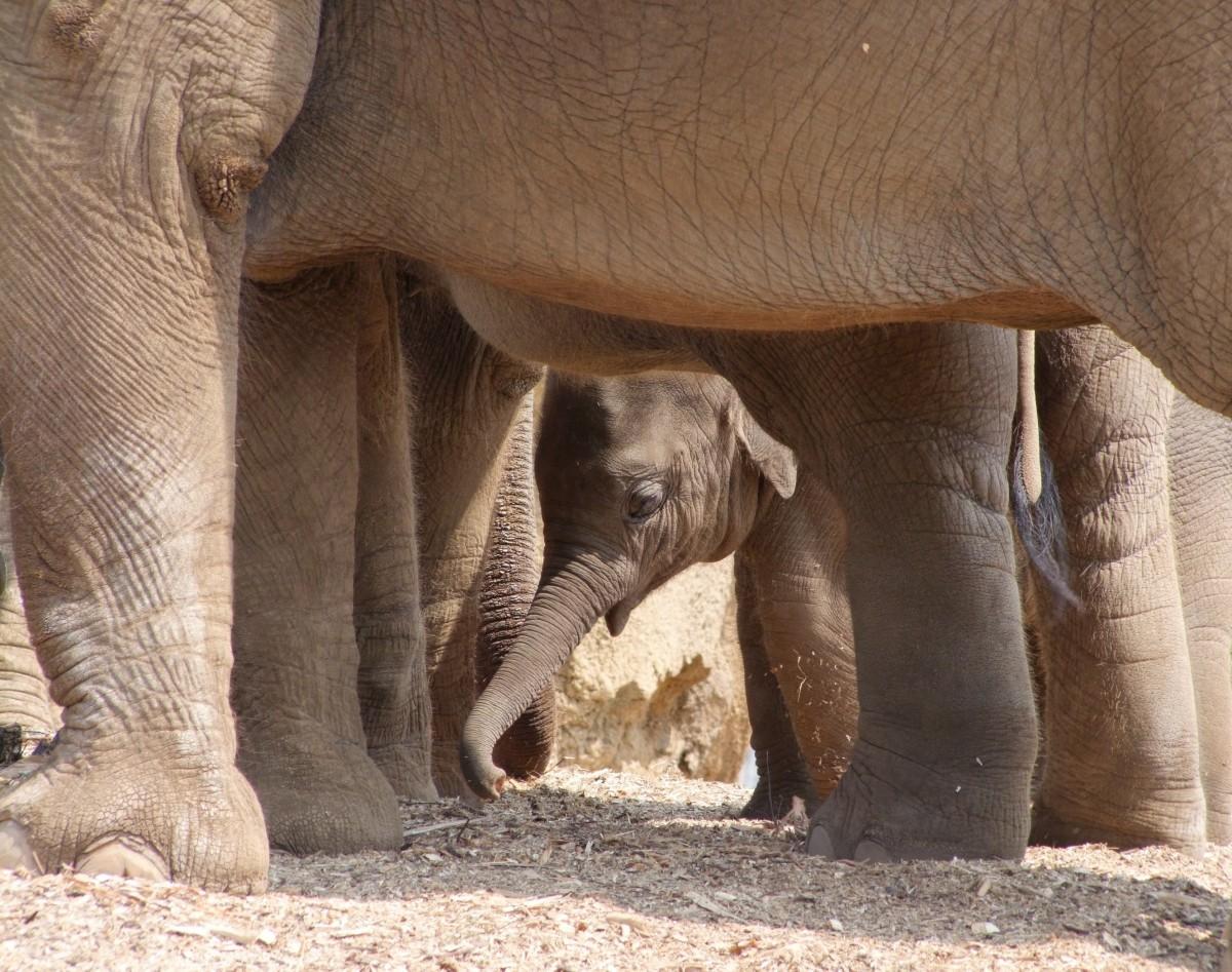 cute baby elephants born to be wild photos news peta asia