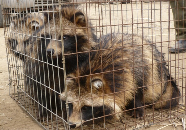 Faces of the Fur Industry (Photo List)
