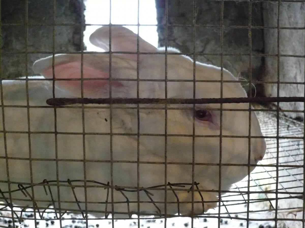 Lone Rabbit Side Fur