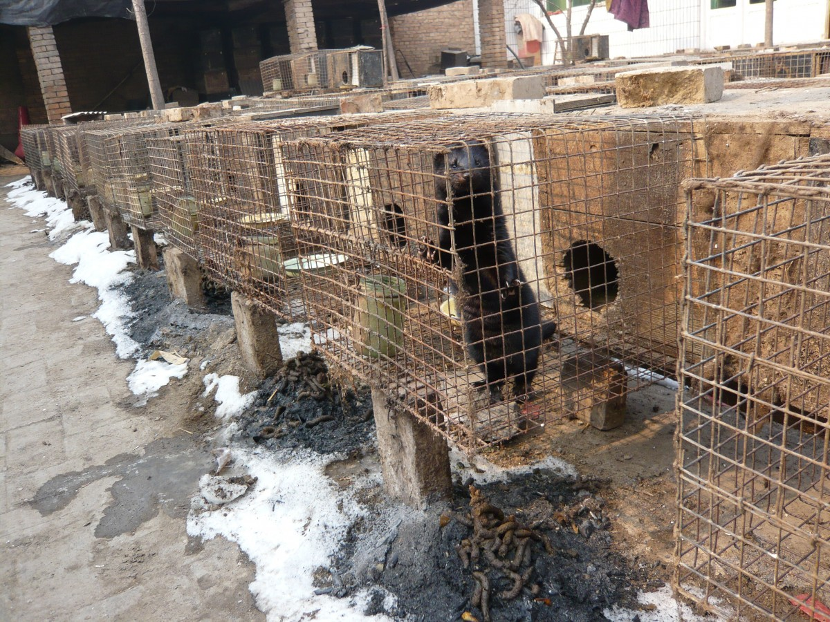 Ferret Cages down row