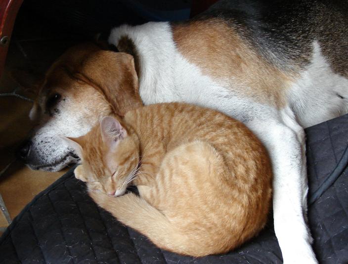 Jock and a cat