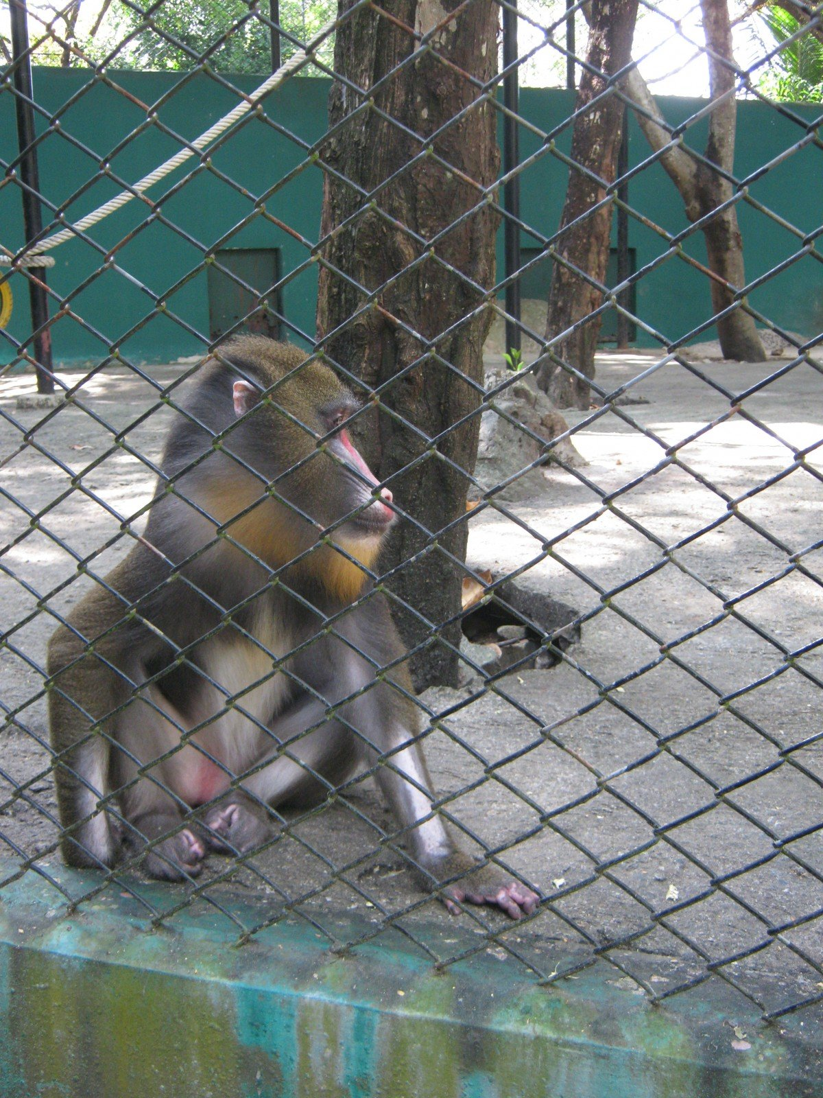 Urgent Alert: Ask Government to Close the Surabaya Zoo | News | PETA ...