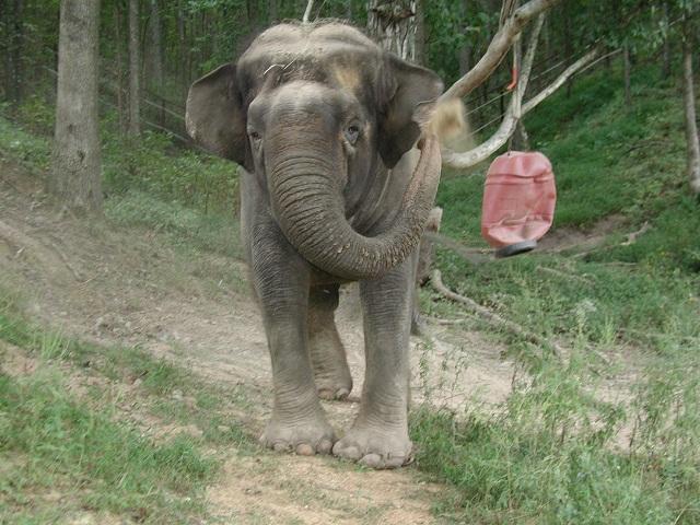 Tina at Elephant Sanctuary