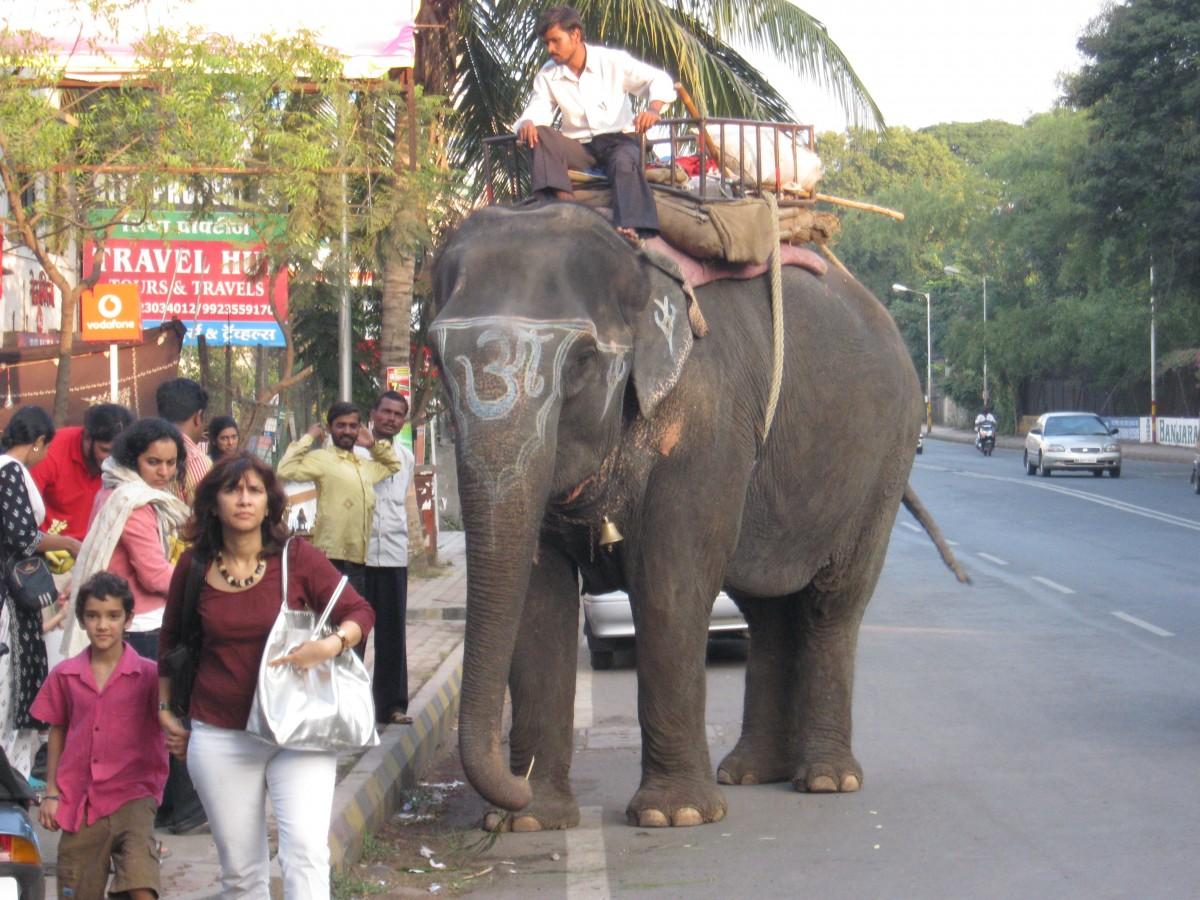 Elephant rides on the street