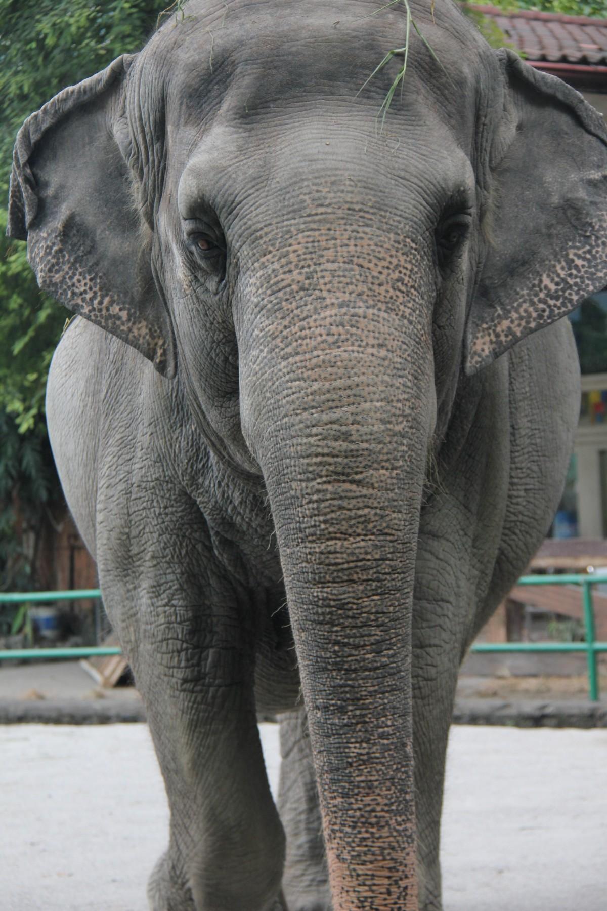 Mali at the Manila Zoo