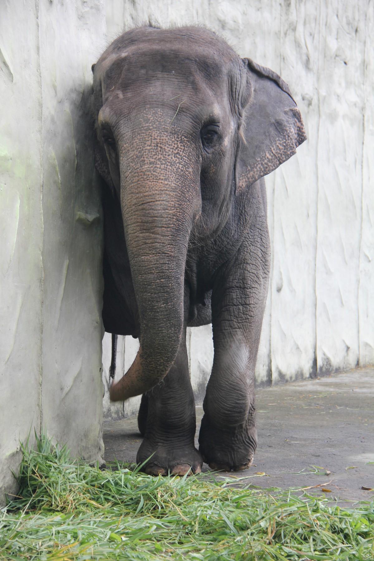 Mali, Manila Zoo
