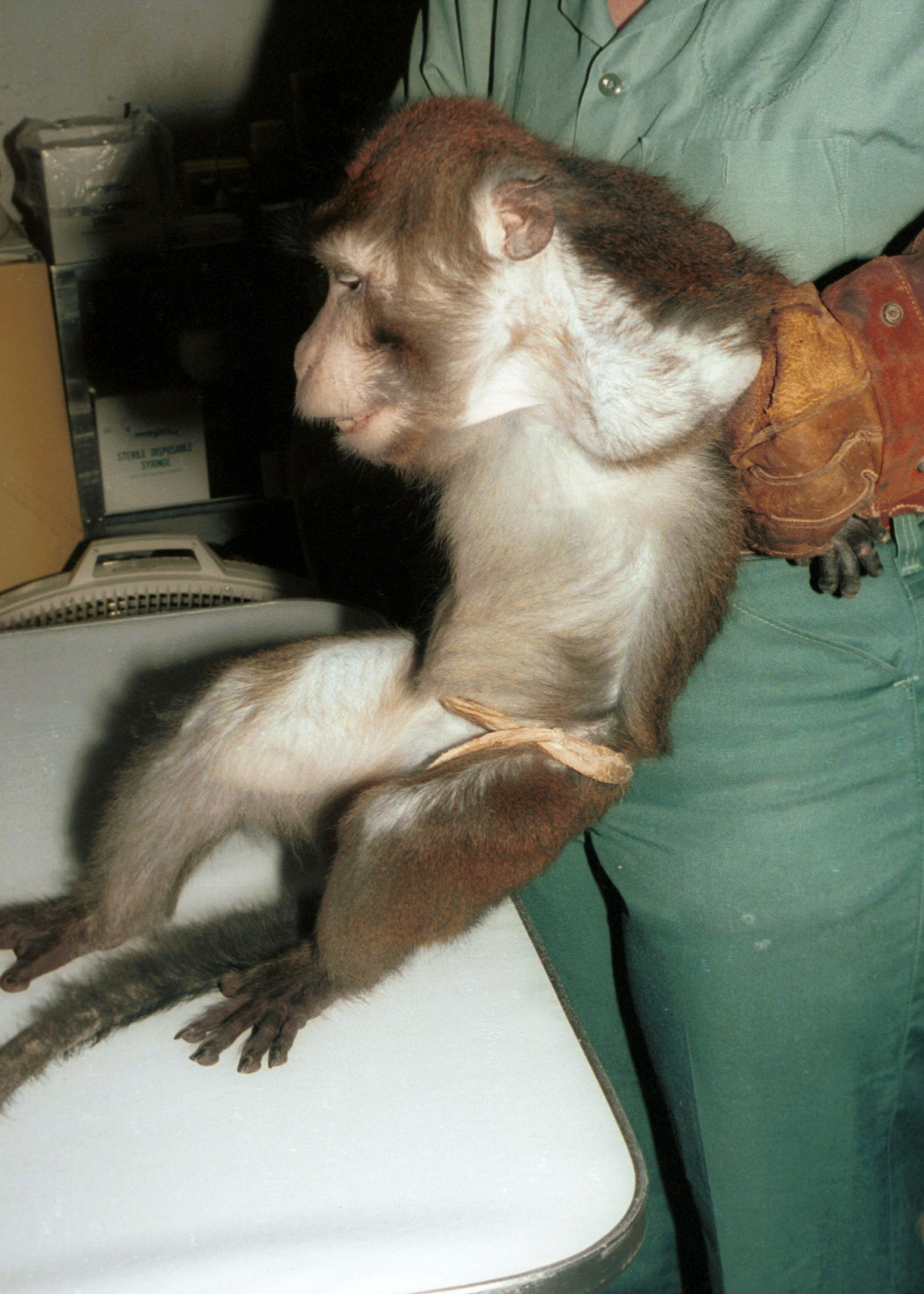 monkey_vivisection
