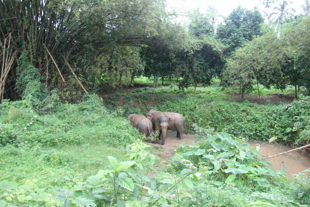 elephants at sanctuary