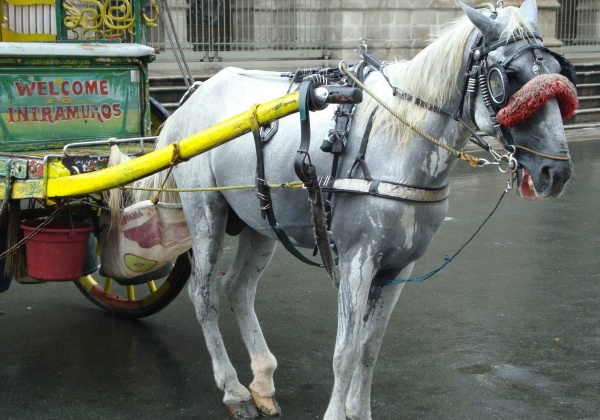 Tweet @Grabph to Ask It to Stop Offering Horse-Drawn Carriage Rides!