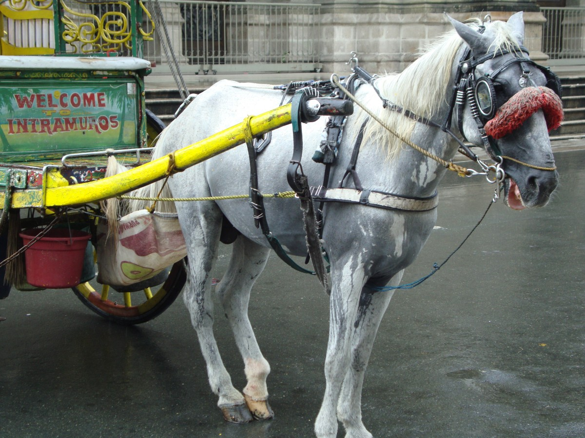 Horse-drawn carriage Manila