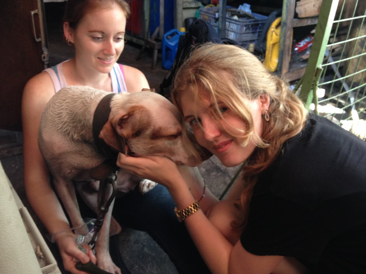 Helping to care for stray and chained dogs