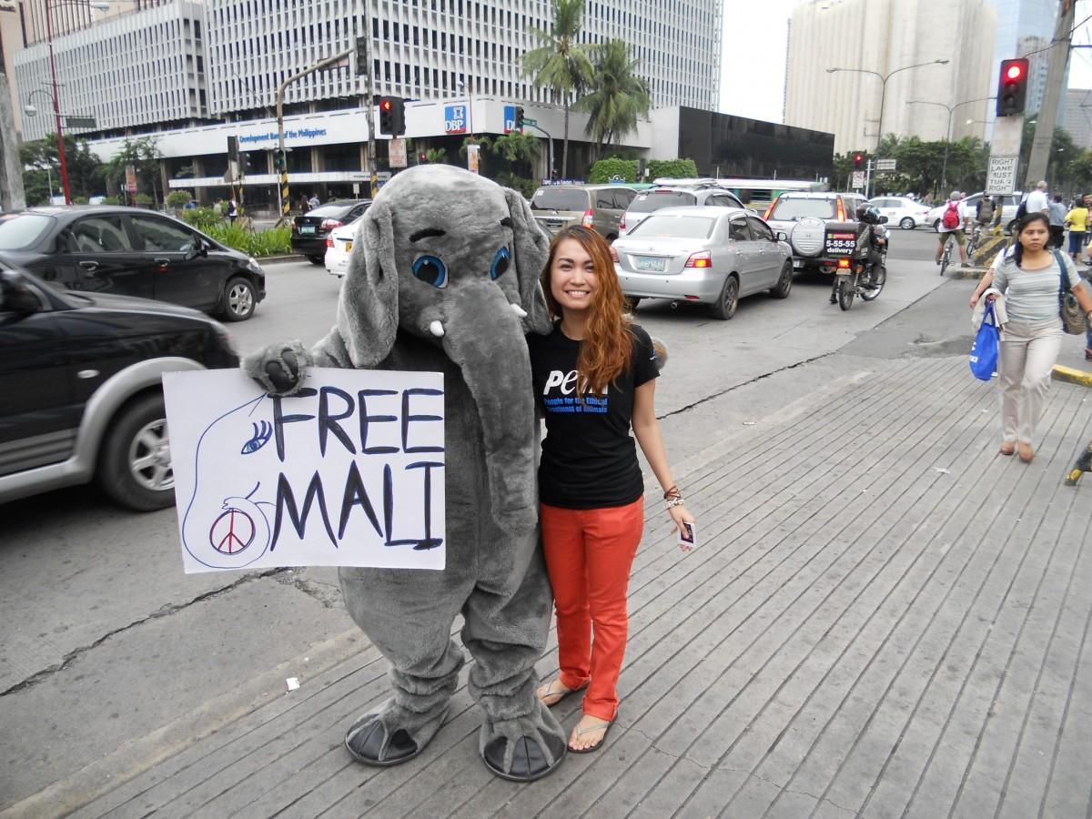Mali the elephant leafleting