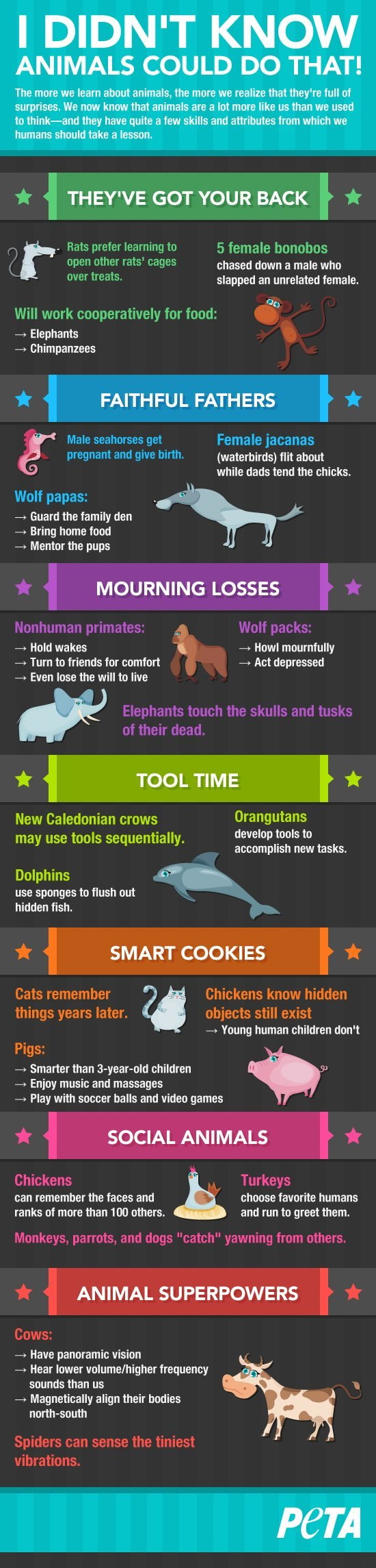 i-didn't-know-animals-infographic