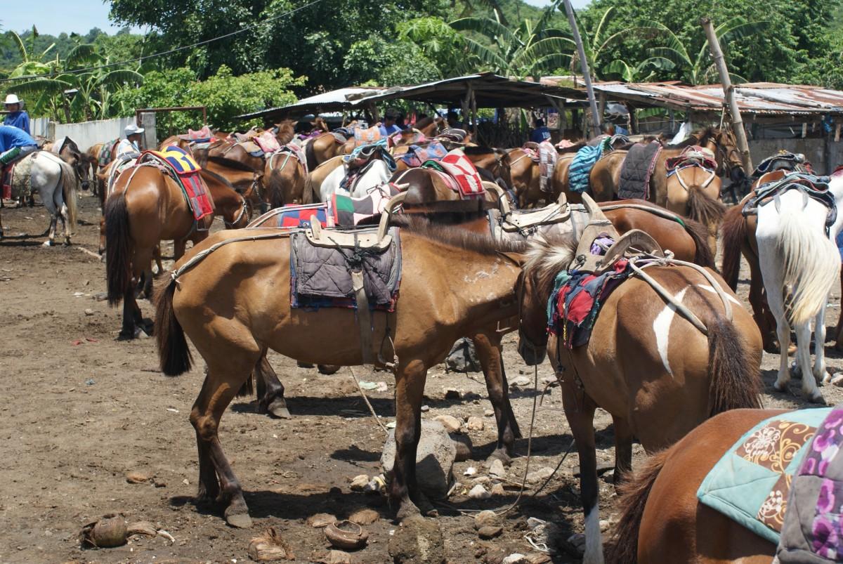 Tagaytay horses